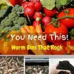 Worm Bins That Rock vegetable produce, composting worms, worm castings, and a worm bin.