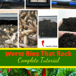 Worm Bins That Rock black plastic worm bin