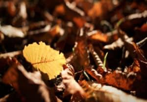 DIY Vermicomposting of Fall Leaves