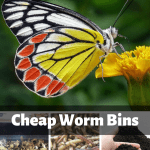 Cheap Worm Bins butterfly on a flower, worm bin, composting worms, and worm castings.