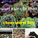 Cheap Worm Bins kale, worm bin, composting worms, and worm castings.