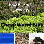 Cheap Worm Bins lettuce field, tote, composting worms, and vermicompost