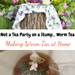 Making Worm Tea at Home tea party on a stump outdoors