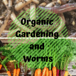 Organic Gardening and Worms carrots and composting worms.