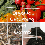 Organic Gardening and Worms pile of vegetable produce, composting worms, and worm castings