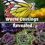 Worm Castings Revealed kale and a butterfly on a flower.