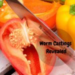 Worm Castings Revealed cutting a red pepper.