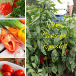 Worm Castings Revealed four pictures of produce grown with worm castings