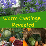 Worm Castings Revealed root veggies, cabbage, and flower garden.