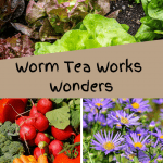Worm Tea Works Wonders lettuce, varied vegetables, and flowers