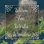 Worm Tea Works Wonders watering herbs