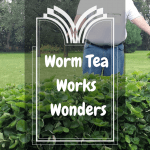 Worm Tea Works Wonders worm tea treated strawberries.