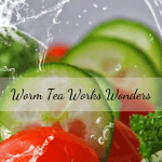 Worm Tea Works Wonders salad grown with worm castings tea.