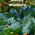 Worm Tea Works Wonders vegetable and flower garden.