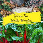 Worm Tea Works Wonders garden and beets growing
