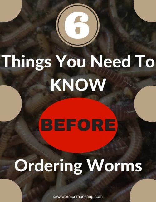 6 Things You Need To Know Before Ordering Worms