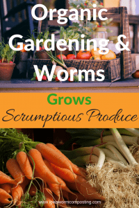 Organic Gardening & Worms grows scrumptious vegetables with two baskets of organic vegetables