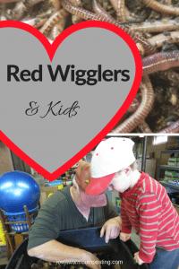 Red Wigglers & Kids Grandpa and grandson tending a worm bin