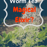 Worm Castings Tea Watering greens with worm castings tea