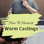 How To Harvest Worm Castings a big pile of worm castings and a small handful of worm castings.