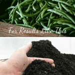 How To Harvest Worm Castings Pile of green beans and worm castings