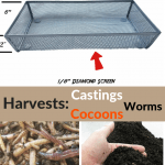 Worm Castings Screen harvester designed for worm growers that have just a few worm bins to harvest.