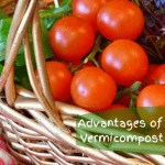 Advantages of Vermicompost basket of veggies.