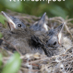Advantages of Vermicompost baby robins in a nest