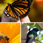 Advantages of Vermicompost butterfly, bee. and a bird