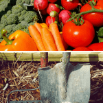 Advantages of Vermicompost garden vegetables and garden tools