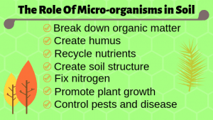 The Role Of Micro-organisms in Soil graphic.