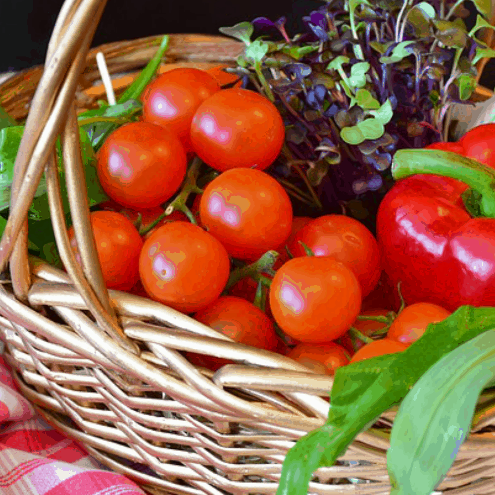 Advantages of Vermicompost vegetable basket.