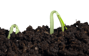 Healthy Soil with plants sprouting