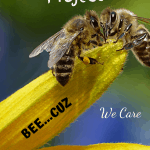 Vermicompost Project honey bee on a flower