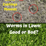 Worms in Lawn before and after pictures of lawn