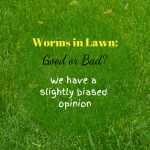Worms in Lawn healthy lawn