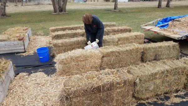 Straw Bale Gardening 2 putting down wood mulch