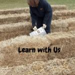 Straw Bale Gardening setting up the straw bales