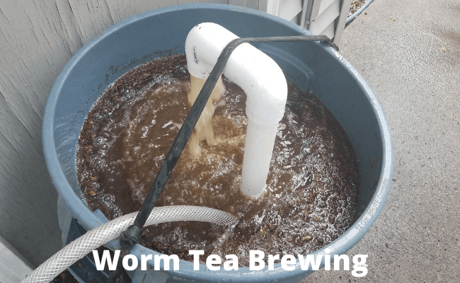 Worm Tea Brewing
