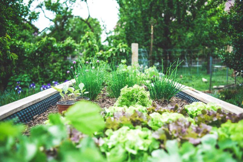 Earth Day Garden Tips