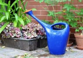 watering can for worm tea